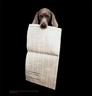 Dog_newpaper